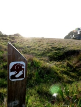 Travelogue: Sea Ranch